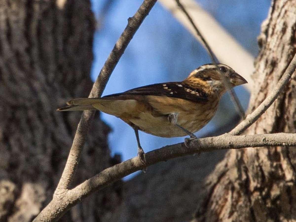 september 2014 san diego birding